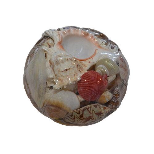 Набор  ракушек 8'' Фрукты моря с рамосусом