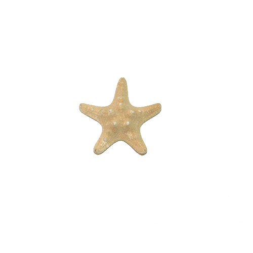 Морская звезда Jungle 1-2''