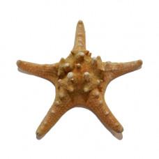 Морская звезда Jungle 5-7''