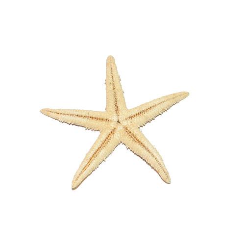 Морская звезда сахарная 2-3''