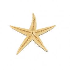Морская звезда сахарная 3-4''