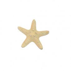 Морская звезда Thorny 2-3''