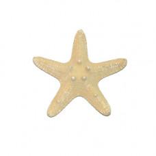 Морская звезда Thorny 4-6''