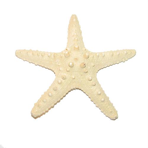 Морская звезда Thorny 6-8''