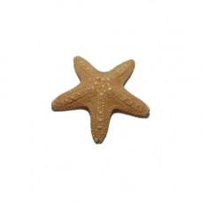 Морская звезда филиппинская 2-3''