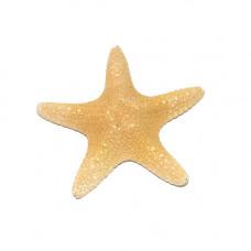 Морская звезда филиппинская 4-6''