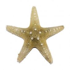 Морская звезда Thorny 3-4''