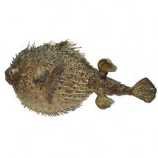 Рыба-ёж 15-16''