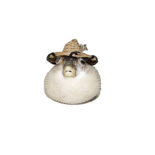Рыба-попугай в шляпке 3-4''